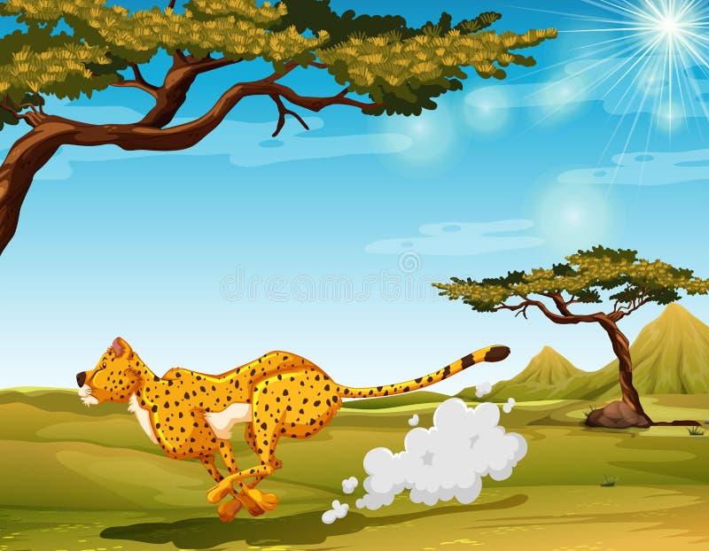 cheetah illustration libre de droits