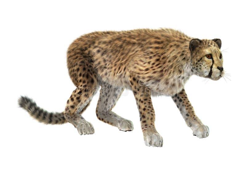 Download Cheetah fotografia stock. Immagine di mammifero, gatto - 56887660