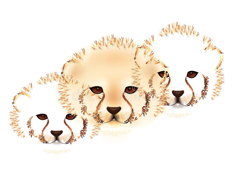 Cheetah cubs. Faces of cheetah cubs in abstract on white background vector illustration