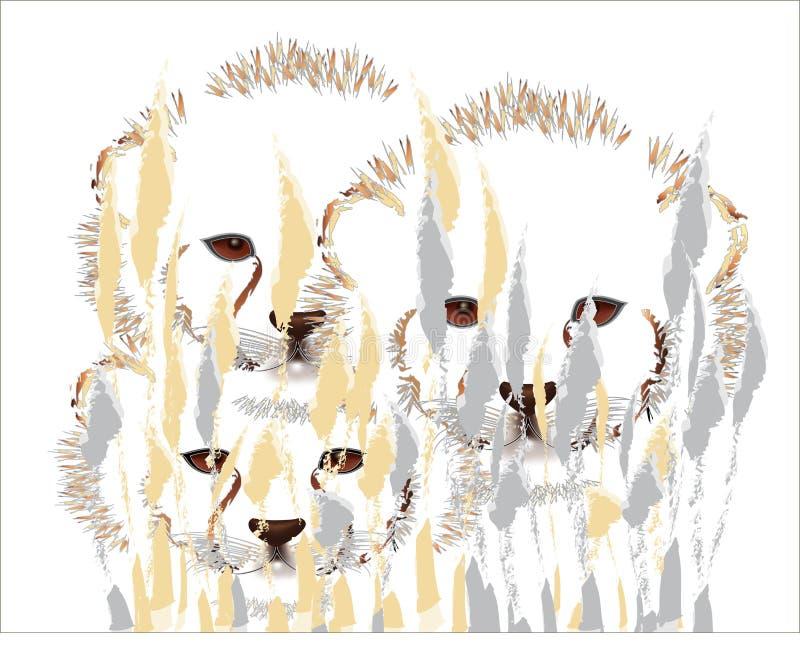 Cheetah cubs. Hiding behind the bush stock illustration