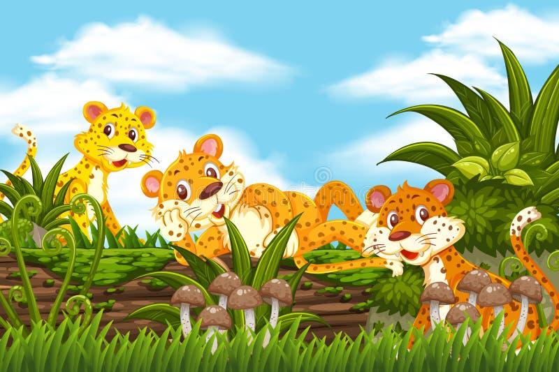Cheetah in de jungle stock foto