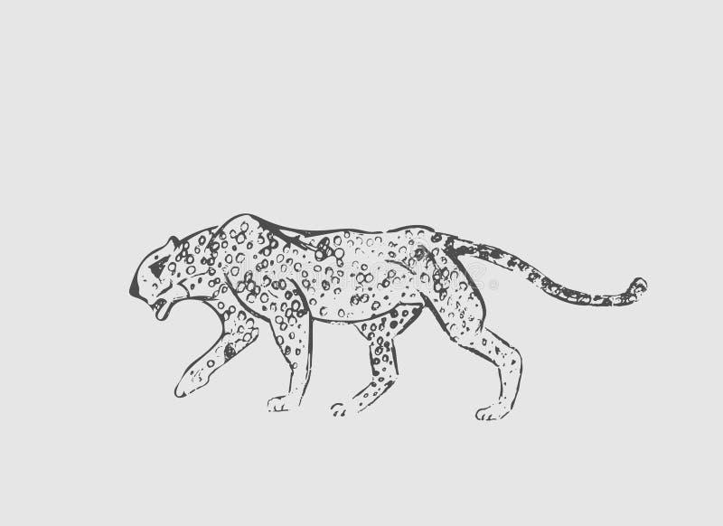 cheetah Handen dragit färgpulver skissar Horisontalteckning Vektorgravyr Rovdjurs- linje konst Svart linje illustration som isole royaltyfri illustrationer