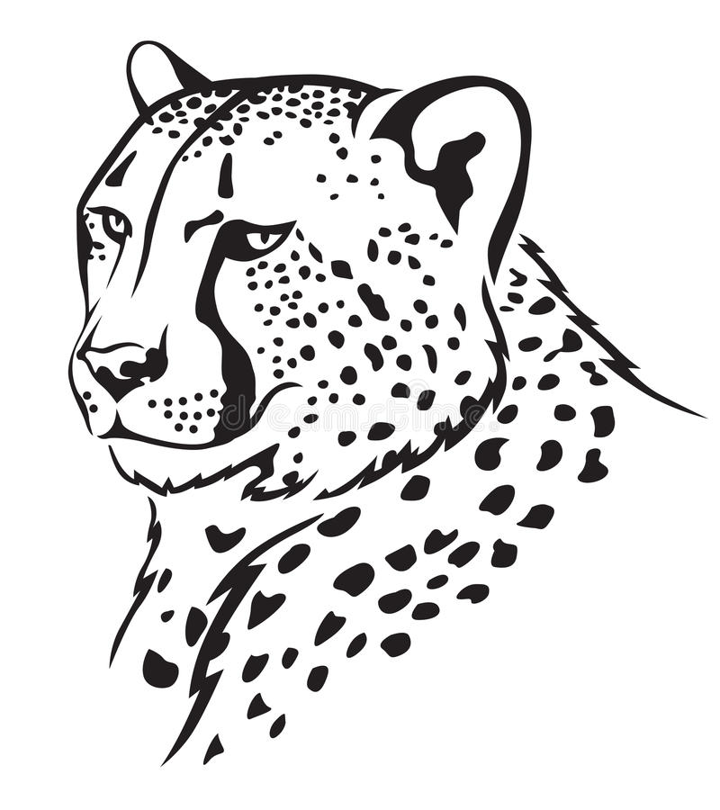 Cheetah muzzle. The contour image of the cheetah's muzzle stock illustration