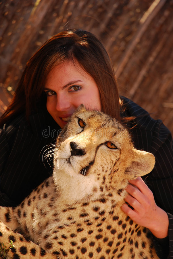 Cheetah pet. A beautiful tame African Cheetah pet cuddled by an attractive young caucasian woman model in the background royalty free stock image