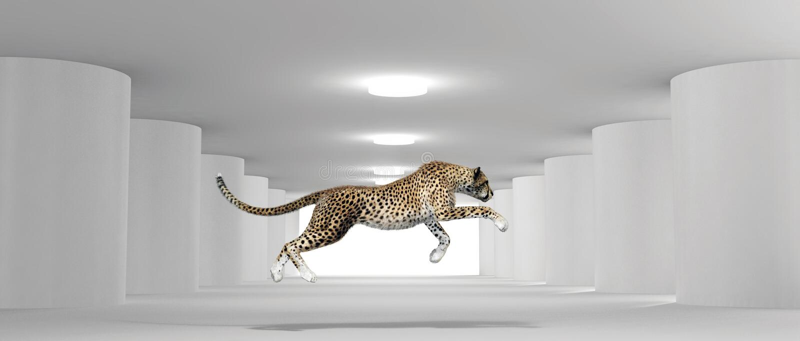Cheetah running in a white room stock illustration