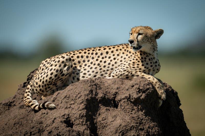 Cheetah rust op een termietenheuvel die terugkijkt royalty-vrije stock afbeeldingen