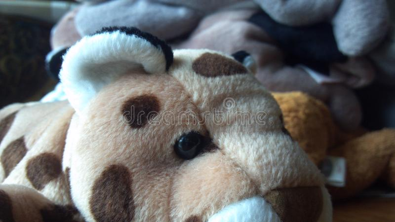 Cheetah Stuffed animal royalty free stock images