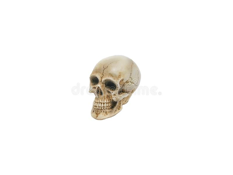 Chef de crâne, chef humain placé sur un fond blanc photos stock