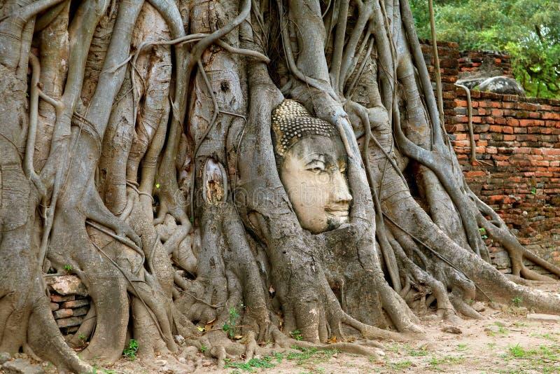 Chef de l'image de Bouddha dans les racines d'arbre de Bodhi, Wat Mahathat Ancient Temple, parc historique d'Ayutthaya, Thaïlande image stock