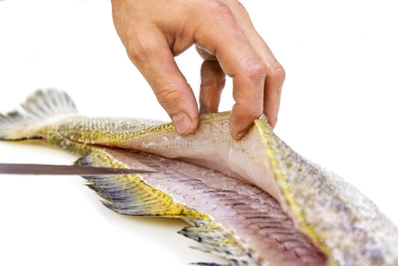 A chef filleting a zander with a knife on white background. Skin and fins royalty free stock images