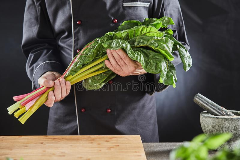Chef holding a bunch of fresh healthy Swiss chard royalty free stock photo