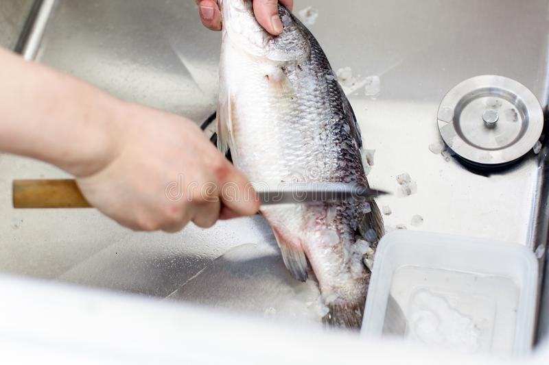 Chef at work,  chef filleting fish at the kitchen, Chef in restaurant kitchen filleting fish. Chef at work, chef filleting fish at the kitchen, Chef in stock image
