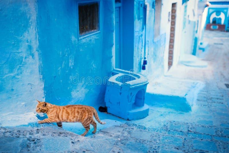 Chefchaouen - błękitny miasto Maroko Pomarańczowy kot w błękitnym mieście Szczegół na błękitne ściany i drzwi Błękitna grodzka ul obrazy royalty free