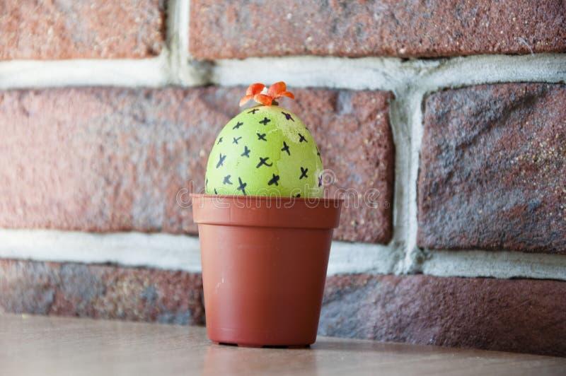 Chefs d'oeuvre de cuisine Chasse à oeufs cuisine Idée peu commune Jeunes plantes de ressort greenhouse Floraison de cactus Joyeus photos libres de droits