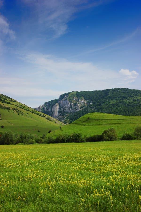 Cheile Turzii dolina, Cluj okręg administracyjny, Rumunia z żółtym kwiatu pola przedpolem obrazy stock