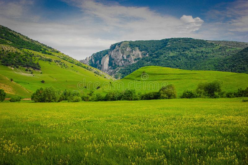 Cheile Turzii dolina, Cluj okręg administracyjny, Rumunia z żółtym kwiatu pola przedpolem obraz stock