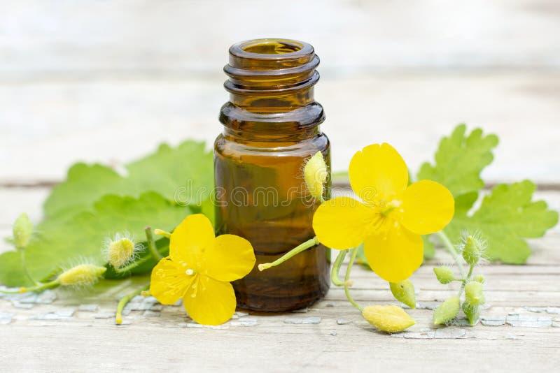 Chelidoniumcelandine kruidcelandine met bloemen en tint van celandine in donkere fles royalty-vrije stock foto's