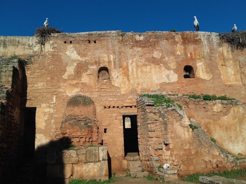 chellah de Rabat photos stock