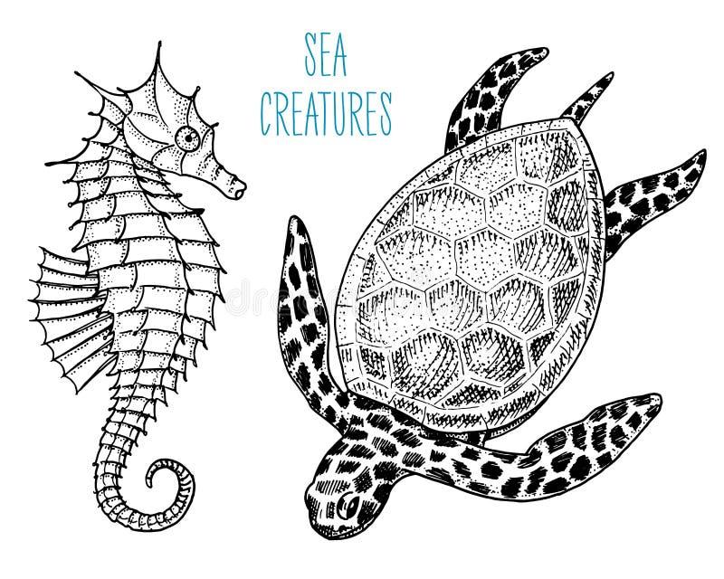 Cheloniidae de la criatura del mar o tortuga verde y seahorse mano grabada dibujada en el viejo bosquejo, estilo del vintage náut ilustración del vector