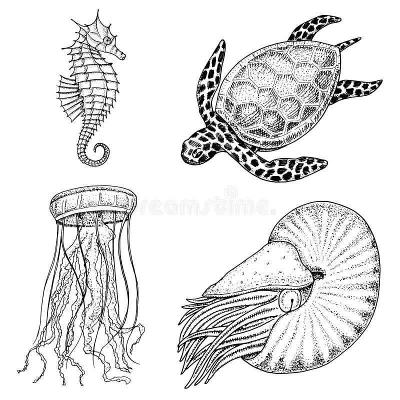 Cheloniidae de la criatura del mar o tortuga verde y seahorse pompilius, medusas y estrellas de mar o molusco del nautilus grabad ilustración del vector
