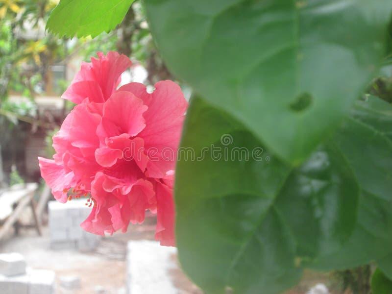 Chembarathi royalty-vrije stock fotografie
