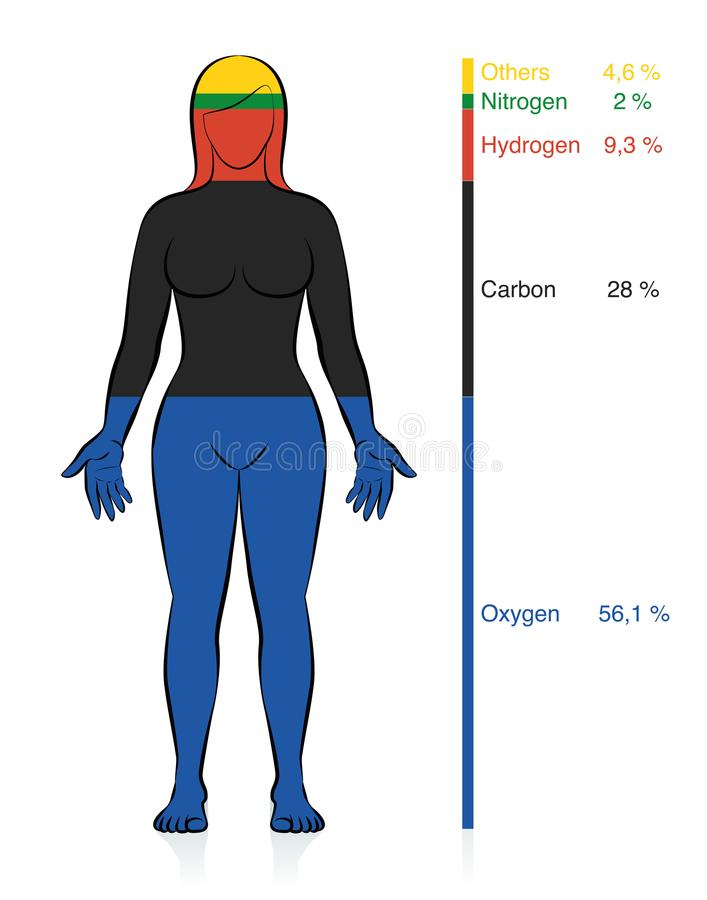 Chemical Composition Human Body Female Chemical Elements. Amount of the most common chemical elements oxygen, carbon, hydrogen and nitrogen in the human body vector illustration