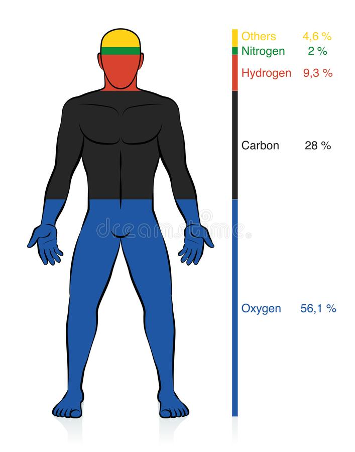 Chemical Composition Human Body Male Chemical Elements. Chemical composition of the human body. Oxygen, carbon, hydrogen, and nitrogen, the basic organic vector illustration