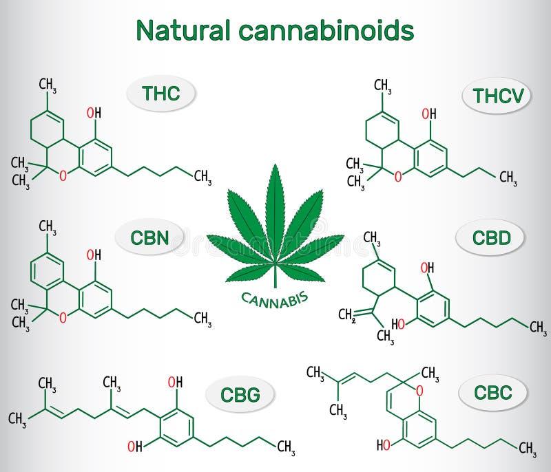 Chemical formulas of natural cannabinoids in cannabis : tetrahydrocannabinol (THC), tetrahydrocannabivarin (THCV) , cannabidiol ( royalty free illustration