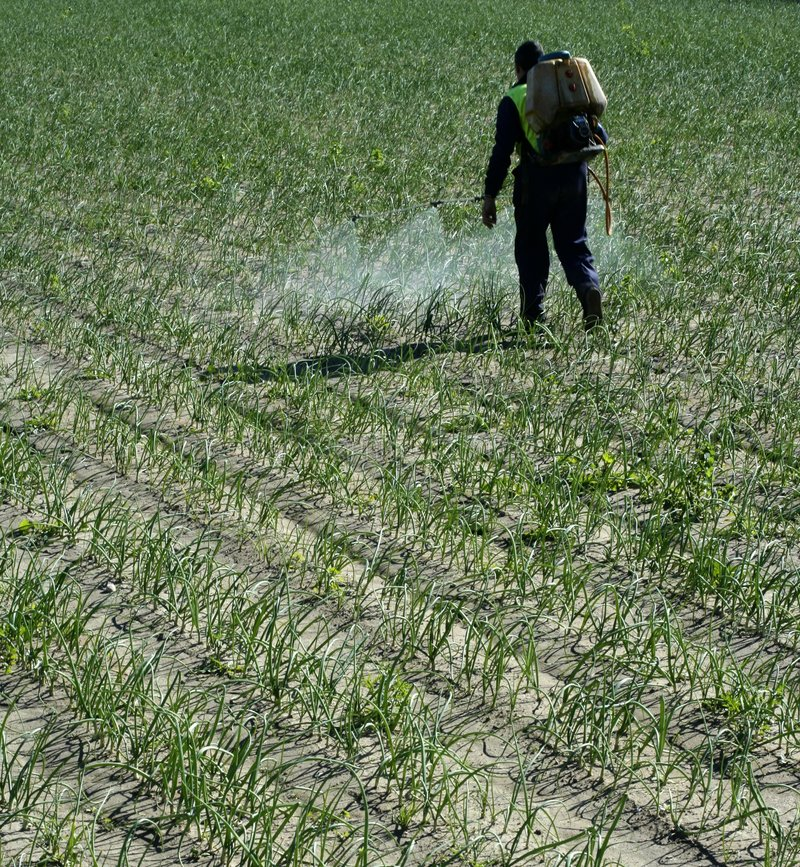 Chemical human application, onion fields stock images