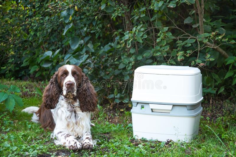 Chemical portable toilet and dog are standing on green meadow. The concept of cleaning behind his dog on the street. A chemical portable toilet and a dog are royalty free stock image