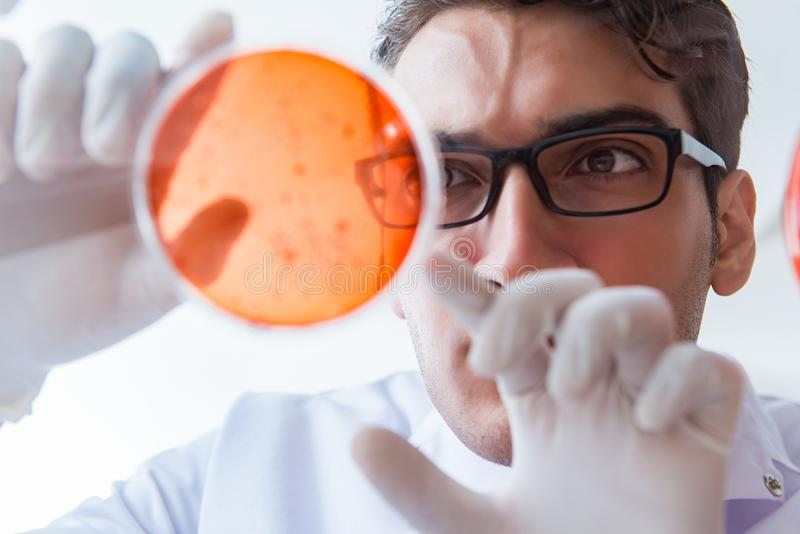 Chemik pracuje w laboratorium z niebezpiecznymi substancjami chemicznymi zdjęcia royalty free