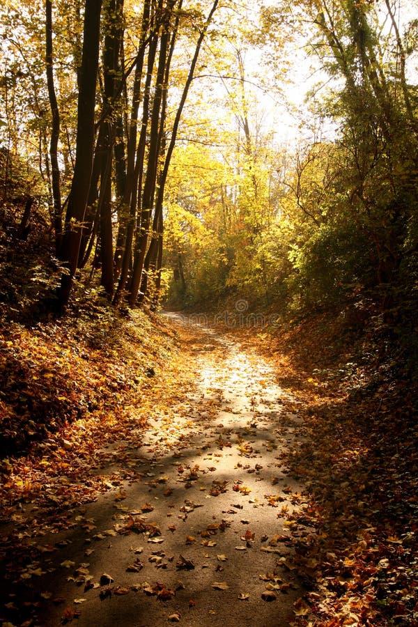 Chemin à travers des bois dans l'automne image stock