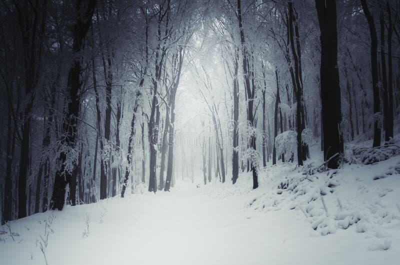 Chemin à travers l'hiver photo libre de droits