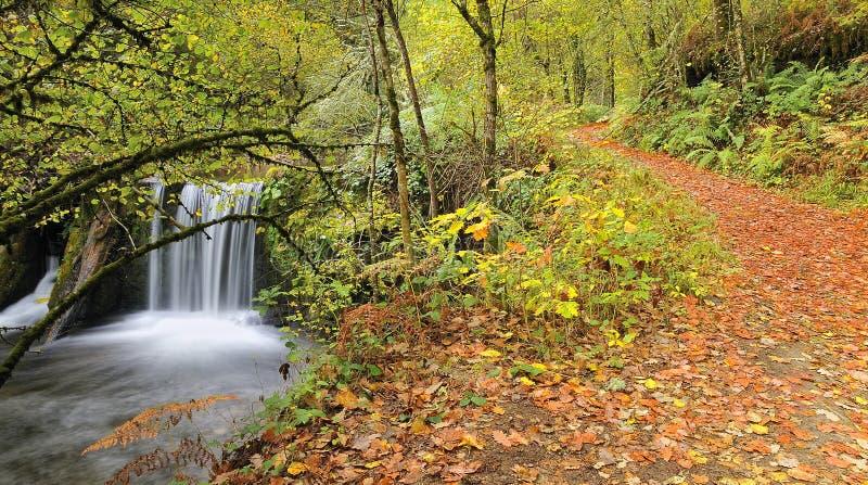 Chemin à travers la forêt. images libres de droits