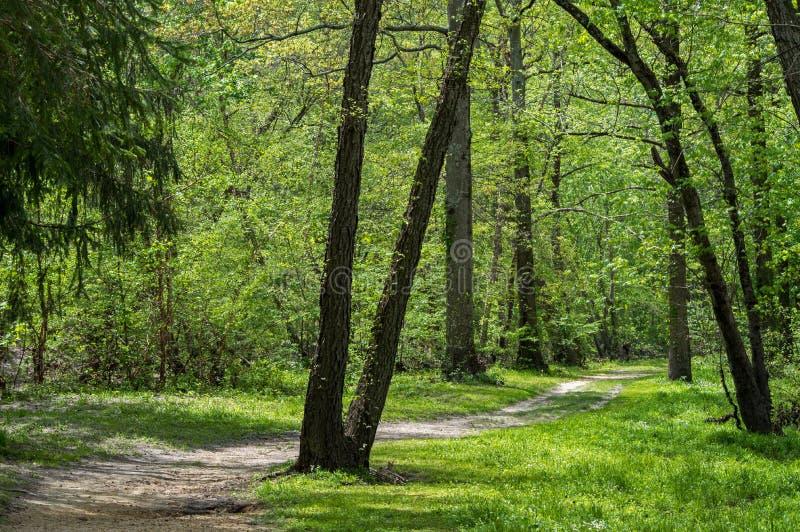 Chemin à travers la forêt image stock