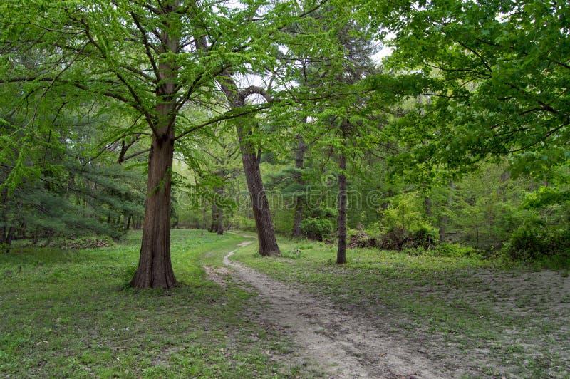 Chemin à travers la forêt photographie stock libre de droits