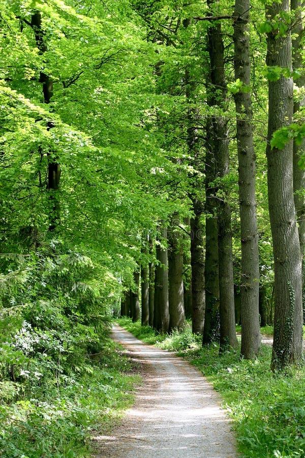 Chemin à travers la forêt photo stock