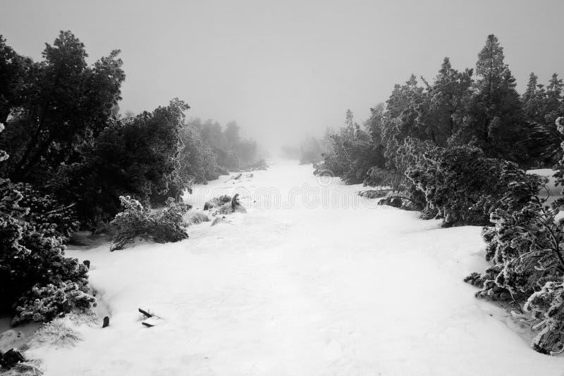 Chemin à travers la forêt brumeuse foncée en hiver. photographie stock libre de droits