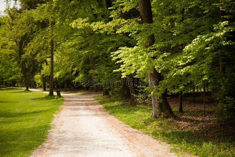 Chemin à travers la forêt en premier ressort avec les arbres verts tout autour photographie stock libre de droits