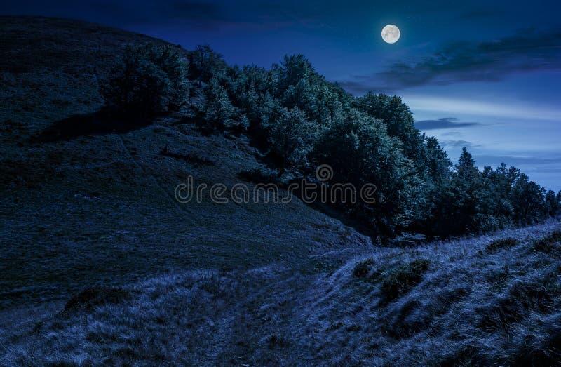 Chemin à travers la forêt sur le pré de flanc de coteau la nuit photos libres de droits