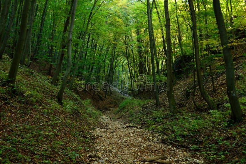 Chemin à travers la forêt verte photos stock