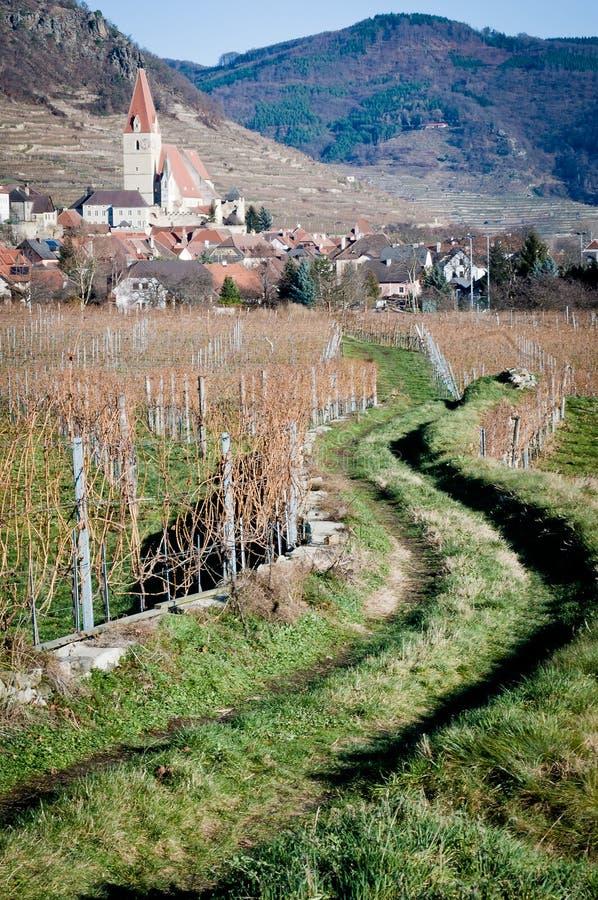 Chemin à travers la vigne photos stock