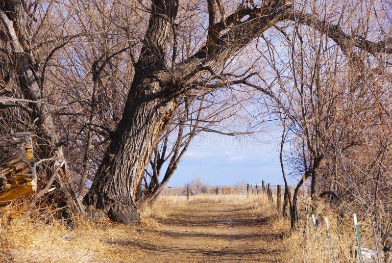 Chemin à travers la voûte d'arbre à paisible là-bas image stock