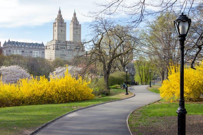 Chemin à travers le paysage de ressort de Central Park à New York City photographie stock libre de droits
