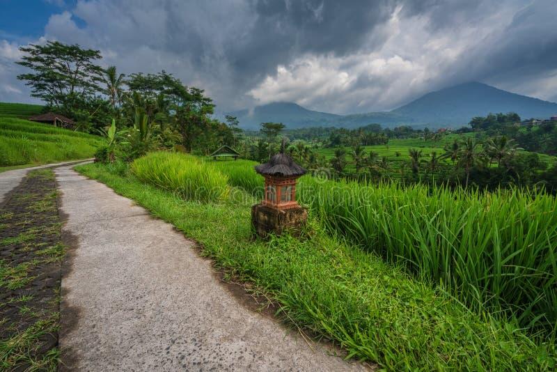 Chemin à travers les rizières de Jatiluwih photographie stock