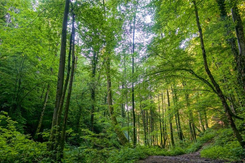 Chemin à travers une forêt de ressort en soleil lumineux, Bistriski Vintgar, Slovénie images stock