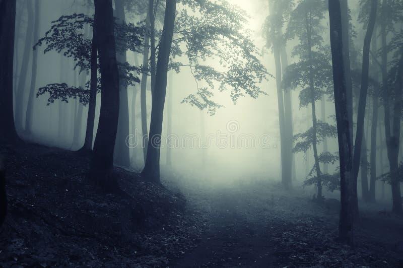 Chemin à travers une forêt foncée image libre de droits