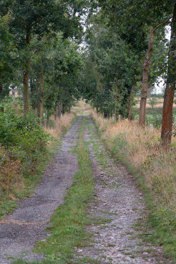 Chemin à travers une ligne des arbres photographie stock libre de droits