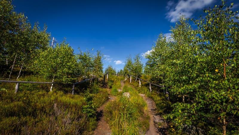Chemin étroit ensoleillé complètement d'herbe avec le ciel bleu dramatique photos stock