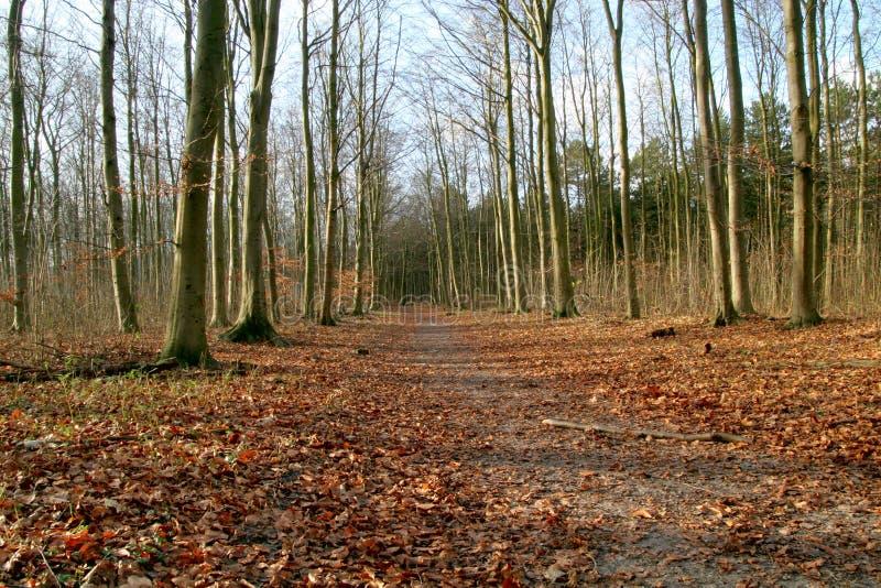 Download Chemin image stock. Image du path, caillebotis, piste, traînée - 57613